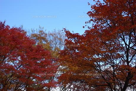 川治温泉の紅葉№76の写真素材 [FYI00111874]