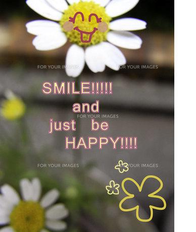 励ます花の写真素材 [FYI00112222]