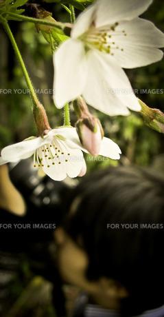 君が咲くの写真素材 [FYI00112235]