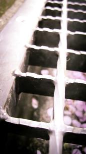 桜色の世界の写真素材 [FYI00112250]
