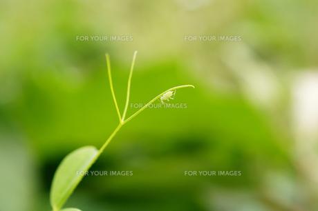 ツルとキリギリスの写真素材 [FYI00112430]