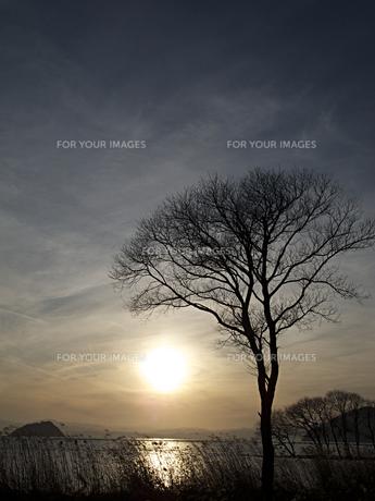 夕方の湖と木の写真素材 [FYI00112625]