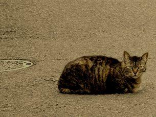 道路の猫の写真素材 [FYI00112671]