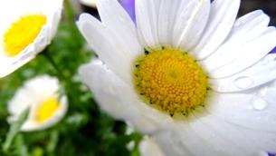 花としずくの写真素材 [FYI00112676]
