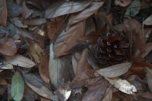 森の秘密の写真素材 [FYI00112681]