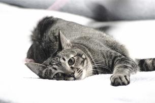 猫の写真素材 [FYI00112741]