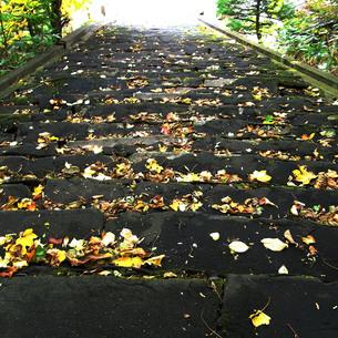 石段の落ち葉の写真素材 [FYI00112757]