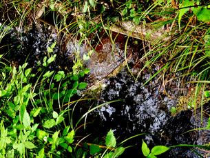 野川公園の春の小川の写真素材 [FYI00112904]