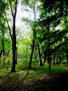 野川公園の新緑の林の写真素材 [FYI00112920]