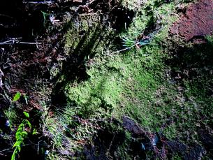 日陰の岩場の苔の素材 [FYI00112948]