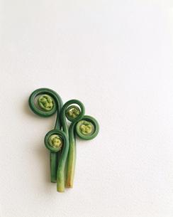 山菜のガンソクの写真素材 [FYI00112955]