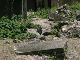 大久野島の廃墟とうさぎの写真素材 [FYI00113029]