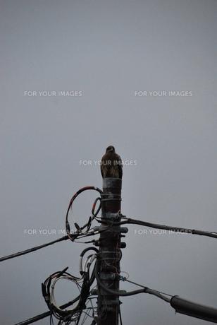 鷹の写真素材 [FYI00113332]