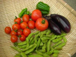 とれたて野菜の写真素材 [FYI00113689]
