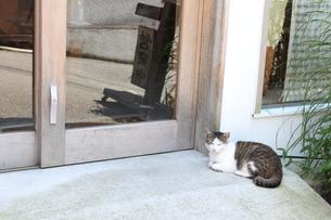 まどろむ猫の写真素材 [FYI00113769]