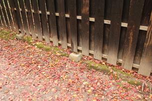 色づく道の写真素材 [FYI00113777]