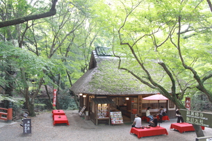 木々に囲まれた茶屋の写真素材 [FYI00113778]