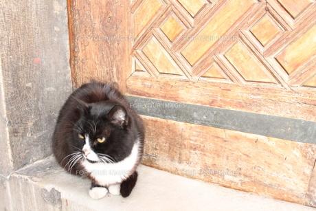 りりしい猫の写真素材 [FYI00113808]