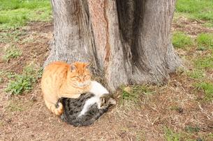 仲良し猫の写真素材 [FYI00113815]