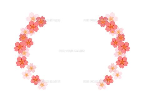桜のフレームの素材 [FYI00113844]
