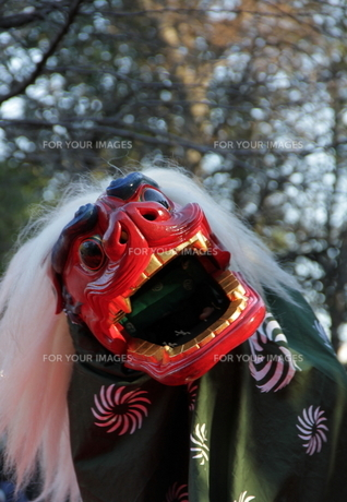 獅子舞の写真素材 [FYI00113875]