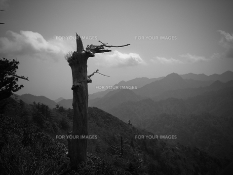 森の叫びの写真素材 [FYI00114057]