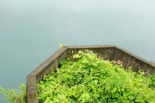 奥多摩湖の湖岸に茂る草の素材 [FYI00114067]