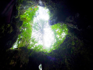 tree of loveの写真素材 [FYI00114073]