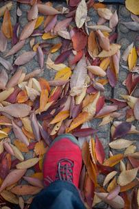 秋の足音の写真素材 [FYI00114074]