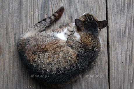 丸まった猫の写真素材 [FYI00114097]