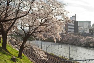 桜のある土手の写真素材 [FYI00114105]