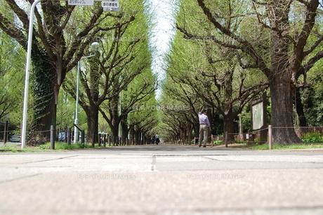 歩道の写真素材 [FYI00114131]
