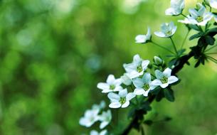 白い花-3の写真素材 [FYI00114376]