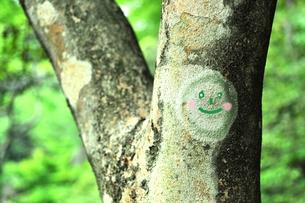 笑顔の木の写真素材 [FYI00114700]