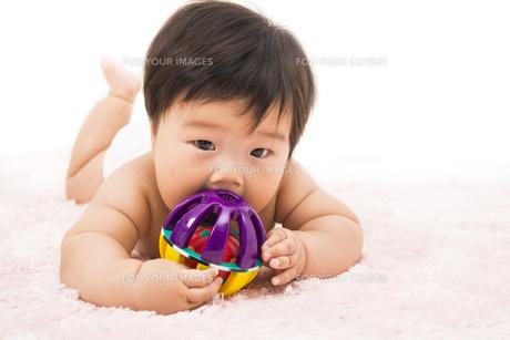 オモチャを舐める赤ちゃんの写真素材 [FYI00115309]