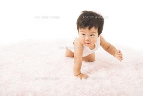 ハイハイする肌着姿の赤ちゃんの写真素材 [FYI00115341]