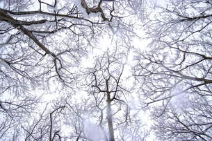 冬の森の素材 [FYI00115391]