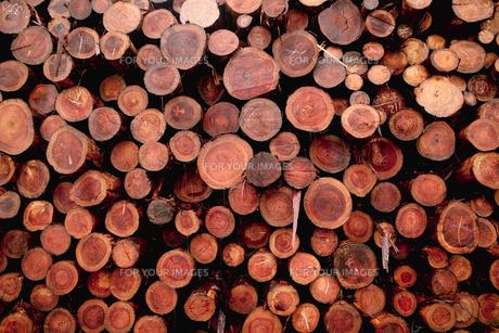 材木の素材 [FYI00115442]