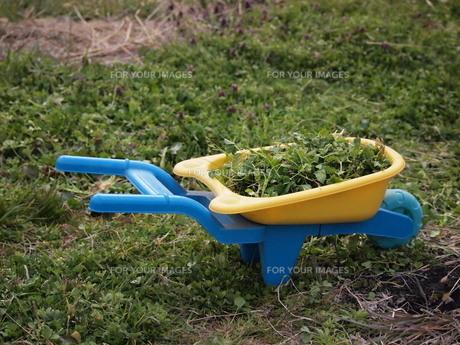 一輪車で草集めの写真素材 [FYI00115532]
