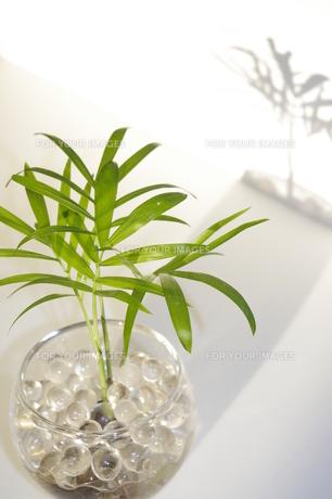 観葉植物の写真素材 [FYI00115610]