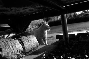 ゴミ置き場にいる野良猫の写真素材 [FYI00115736]