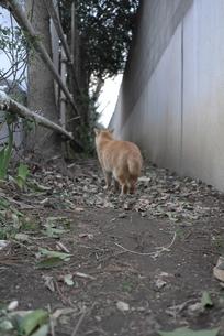 猫の後姿の写真素材 [FYI00115752]