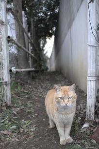 猫の写真素材 [FYI00115757]