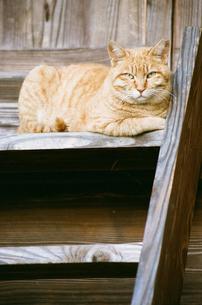階段にいる猫の写真素材 [FYI00115779]