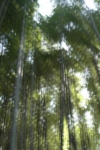 竹林の写真素材 [FYI00115790]