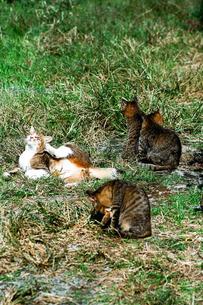 野良猫の親子の写真素材 [FYI00115815]