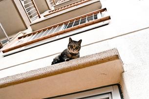 団地の2階に上がる猫の写真素材 [FYI00115996]