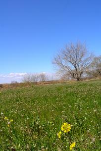 春の風景の素材 [FYI00116005]