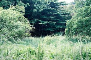 綿毛が舞う草原の素材 [FYI00116016]
