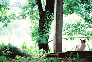 新緑とネコの素材 [FYI00116034]